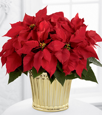 The FTD® Poinsettia Planter by Better Homes and Gardens®