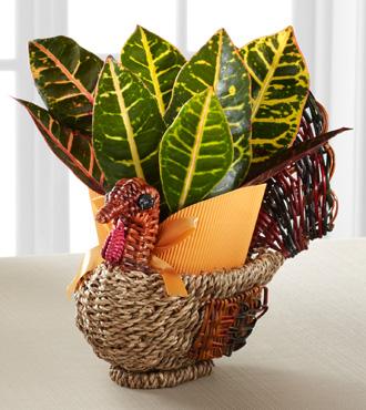 Turkey Trimmings Croton