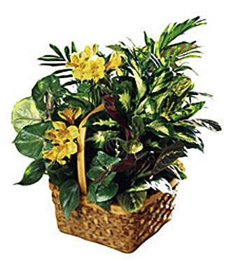 The FTD&reg; A Bit of Sunshine&trade; Basket
