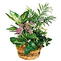 The FTD&reg; French Garden&trade; Basket
