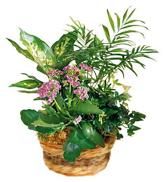 The FTD® French Garden™ Basket