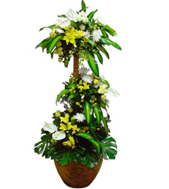 Royal Plant Arrangement with Flowers