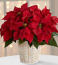 The Red Poinsettia Basket by FTD ® (small)