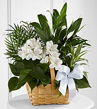 The FTD &reg; Peace & Serenity&trade; Dishgarden