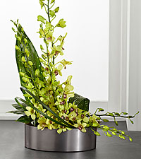 The FTD ® Irresistible Orchid™ Arrangement
