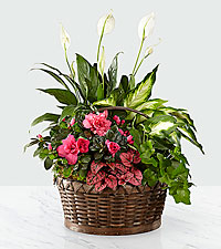 The FTD ® Dream in Pink™ Dishgarden