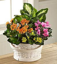 The FTD ® Color Crush™ Dishgarden