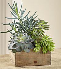 The FTD ® Southwest Sophistication™ Dishgarden