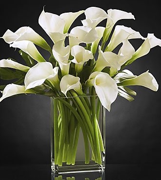 My favorite is calla photo 3453165-1