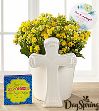 DaySpring ® Brighter Days Kalanchoe with Keepsake Plaque