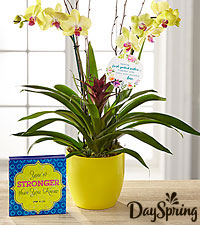 DaySpring ® Flowering Faith Orchid with Keepsake Plaque