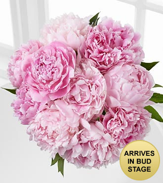 Picture Perfect Peony Bouquet - 10 Stems - No Vase