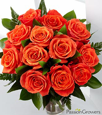 FTD Passion for Life Rose Flowers - 12 Stems of 20-inch Roses
