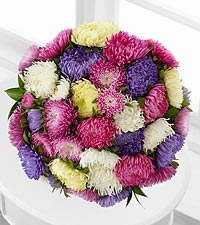 Dream a Little Dream Kralen Aster Bouquet - 15 Stems - No Vase