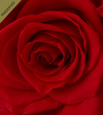 The Red Keepsake Rose™ by FTD® - Single Stem, No Vase