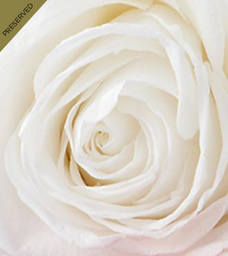 The White Keepsake Rose™ by FTD® - Single Stem, No Vase