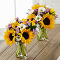 Sunflower Fields Bouquet Duo - 16 Stems - VASES INCLUDED