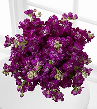 Moonlit Memories Purple Gilliflower Bouquet - 15 Stems, No Vase