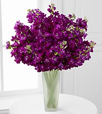 Moonlit Memories Purple Gilliflower Bouquet - 15 Stems - VASE INCLUDED