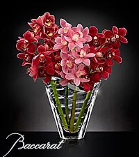 Truly Captivating Cymbidium Orchid Bouquet in Baccarat&reg; Crystal Vase
