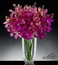 Alluring Elegance Luxury Orchid Bouquet in Rogaska Crystal Gondola Vase