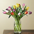 Rush of Color Assorted Tulip Bouquet - VASE INCLUDED