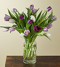 20 Darling Lavender & White Tulips with Vase