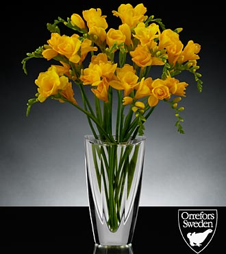 Sunlit Summits Luxury Freesia Bouquet in Orrefors Crystal Mirror Vase - 12 Stems