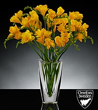 Sunlit Summits Luxury Freesia Bouquet in Orrefors Crystal Mirror Vase - 15 Stems