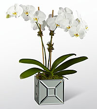 The FTD ® Elegant Impressions™ Luxury Orchid - VASE INCLUDED