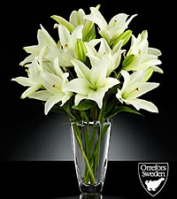 Starfields Flowering Lily Bouquet in Orrefors Crystal Arctic Vase - 6 Stems