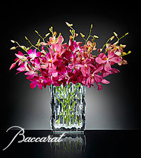 Blushing Sentiments Orchid Bouquet in Baccarat® Crystal Vase