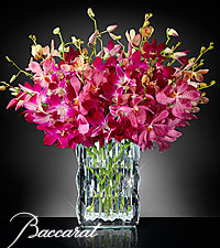 Blushing Sentiments Orchid Bouquet in Baccarat&reg; Crystal Vase