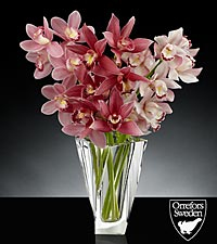 Glistening Grace Luxury Mini Cymbidium Orchid Bouquet in Orrefors Crystal Tornado Vase - 3 Stems