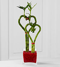 Be Still My Heart Lucky Bamboo