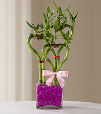 Magnificent Mom Mother 's Day Bamboo Plant