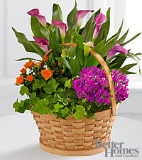 The FTD ® Harvest Wishes Blooming Basket by Better Homes and Gardens ®