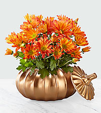 Harvest Joy Mum Plant