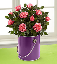 The Color Your Day with Beauty™ Mini Rose Plant by FTD ®
