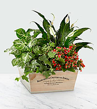 Merry and Bright Holiday Dish Garden Centerpiece