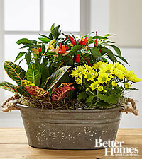 The FTD ® Fall Findings Dishgarden by Better Homes and Gardens ® - BEST