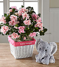 Baby Things Azalea with Plush Precious Moments ® Elephant - Girl