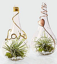 Love is in the Air Valentine 's Day Terrariums