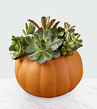 Pumpkin Pickings Succulent Garden