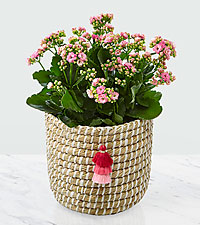 Mom = Love Mother 's Day Kalanchoe