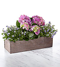 Purple Inspires Windowbox Dish Garden