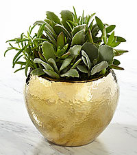 Go for Gold Succulent Garden