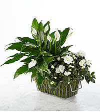 The Best is Yet to Come Blooming Basket