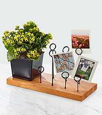 Sunshine State of Mind Kalanchoe with Messenger Board