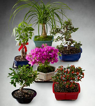 Bonsai of the Month - 3 Month Program